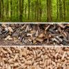 les, dřevo, pelety